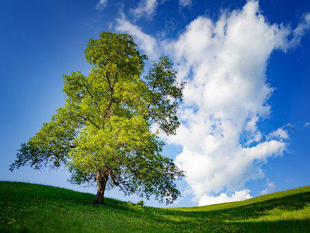 Tree, Spring, Green, Flower, Color, Sky, Colorful