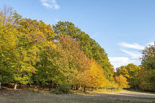 Hungary, Pilis Mountains, Autumn, Forest, Colors