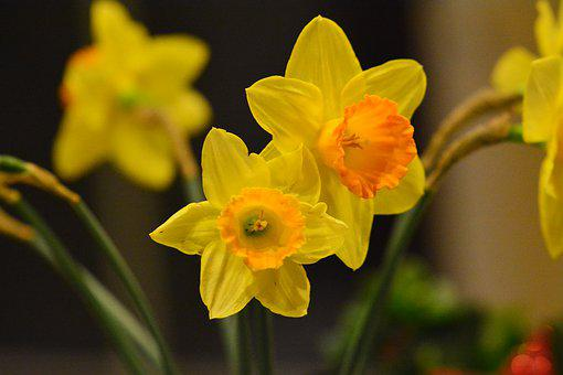 Easter, Flower, Spring, Flowers, Nature, Colorful