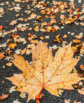 Autumn, Feather, Leaf, Yellow, Fall, Nature, September