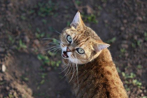 Cat, Spring, Garden, I Love It, Kitten