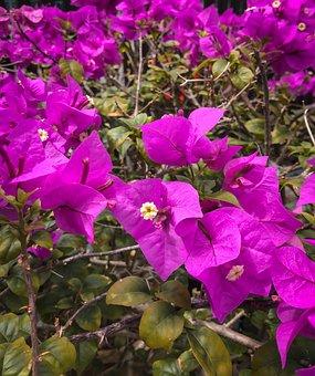 Garden, Bloom, Nature, Blossom, Flowers, Spring, Summer