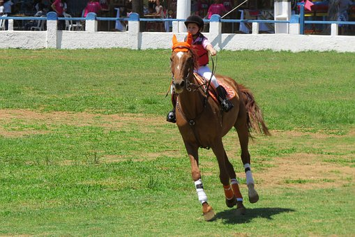 Horse, Girl, The Ride, Equestrianism, Equine, Stallion