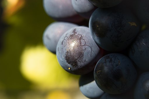 Grape, Winegrowing, Red Wine, Berry, Wine, Fruit