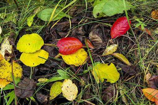 Leaves, Autumn, Red, Yellow, Green, Colorful, October