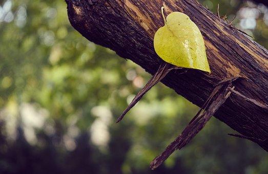 Sweetheart, Love, Heart, Autumn, Heart Shape, Leaf
