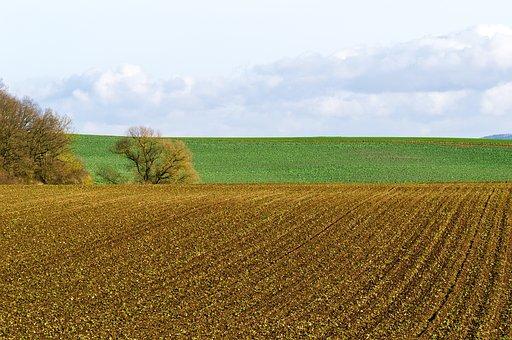 Landscape, Field, Meadow, Bush, Tree, Sky, Clouds