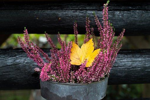 Heather, Leaf, Plant, Nature, Flowers, Leaves, Autumn