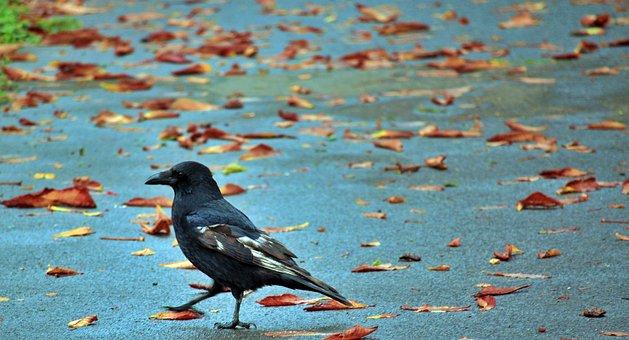 Bird, Leaves, City, Nature, Tree, Animal World, Animal