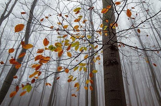 Autumn, Leaves, Fallen, Forest, Leaf, Landscape, Mood