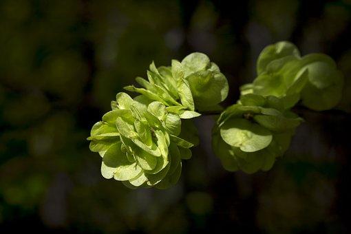 Green, Leaves, Nature, Summer, Plant, Landscape