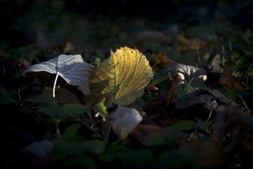 Leaf, Light, Nature, Landscape, Bright, Backlight