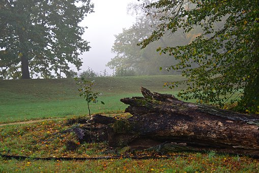 Old Tree, Rots, Morsch, The New Growth, Smaller Tree
