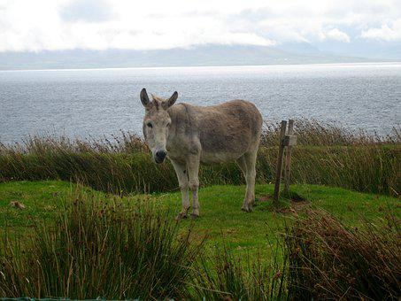 Donkey, Ass, Animal, Nature, Mule, Tenderness, Alone