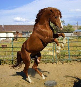 Wild, Stallion, Horse, Mustang, Cowboy, Unicorn, Pony
