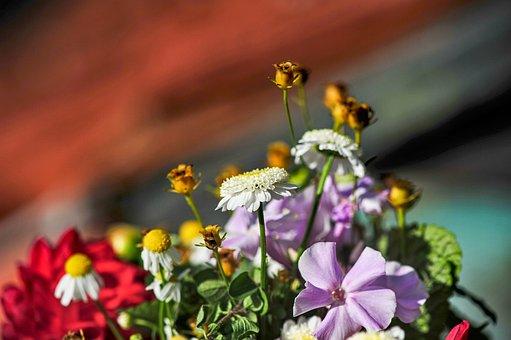 Autumn Flowers, Close Up, Garden, Autumn, Pink, Nature