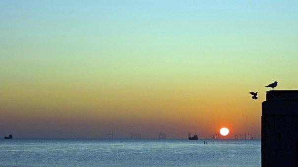 Dawn, Sunrise, Sea, Coast, Sky, Nature, Birds, Seagulls