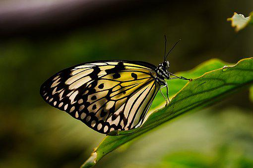 Butterfly, Insect, Nature, Animal, Wing, Macro, Pair