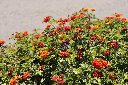 Flowers, Nature, Flora, Blossom, Summer, Plant, Spring