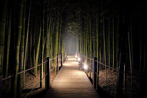 Bamboo, Gil, Forest, Nature, Walk, Plants, Ecology