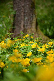 Yellow Flower, Forest, Greenery, Green, Nature, Plant