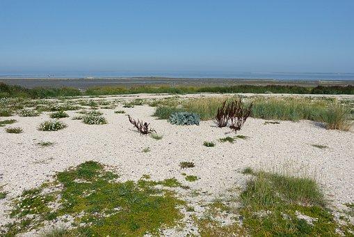 North Sea, Neuharlingersiel, East Frisia, Nature