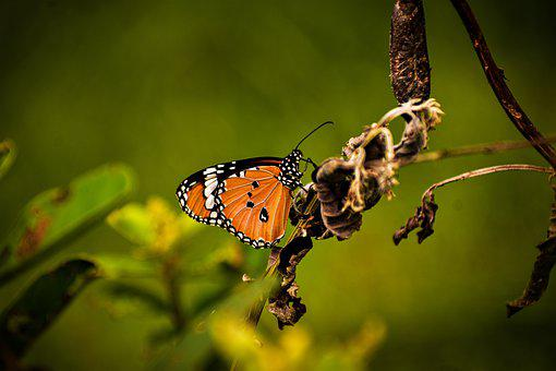 Butterfly, Bird, Insect, Plant, Beauty, Orange