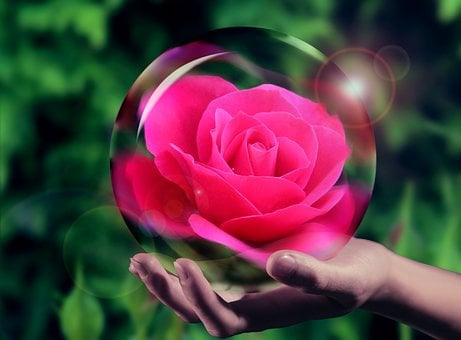 Crystal Ball, Rose, Pink, Flower, Plant, Design
