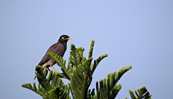 Bird, Sitting, Branch, Animal, Nature, Plumage