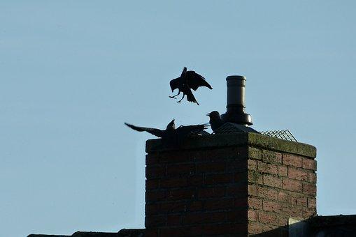 Jackdaws, Chimney, Roof, Birds, Fireplace, Sky