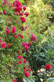 Flower, Pink, Plant, Garden, Nature, Color, Spring