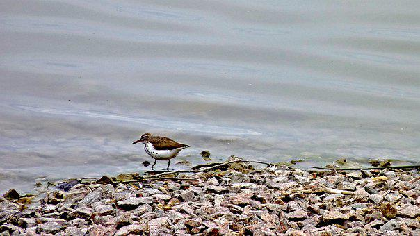 Water Birds, Killdeer, Pond, Landscape, Water, Outdoors