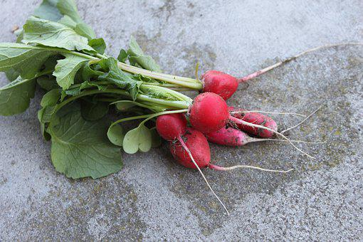 Radish, A Vegetable, Food, Fresh, Vegetables, Nature