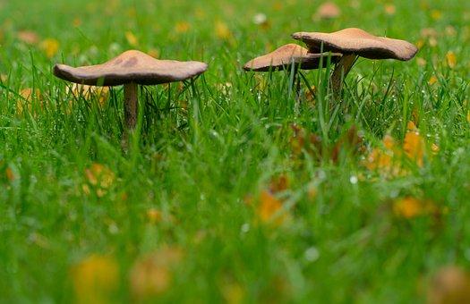 Mushroom, Grass, Wet, Autumn, Forest