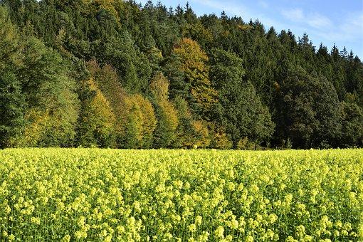 Autumn, Trees, Mustard, Mustard Plant, Forest, Nature