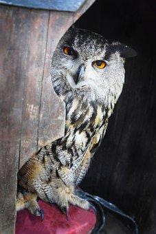 Owl, Grand Duke, Look, Bird, Animals