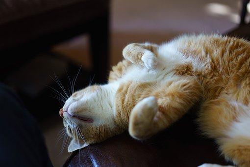 Cat, Sleeping, Sleep, Animal, Cute, Feline, Home, Lazy