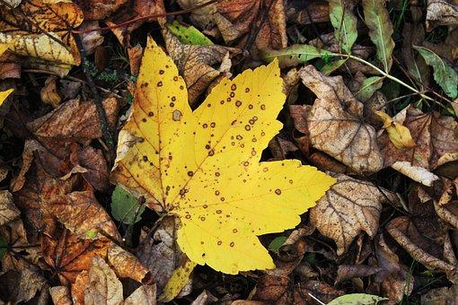 Autumn, Leaves, Nature, Fall, Mood, Seasonal, October