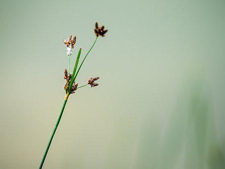 Grass, Plant, Nature, Meadow, Green, Floral, Leaf