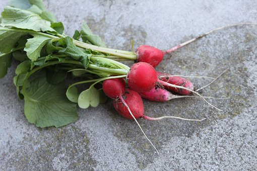 Radish, A Vegetable, Spring, Food, Vegetables, Fresh