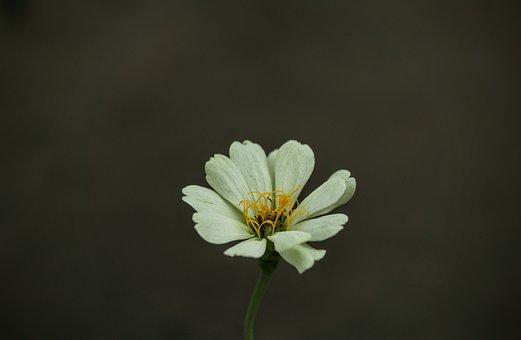 Flowers, Nature, Plant, Macro, Garden, Petals