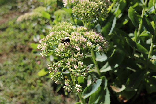 Green, Bees, Macro, Nature, Summer, Plants
