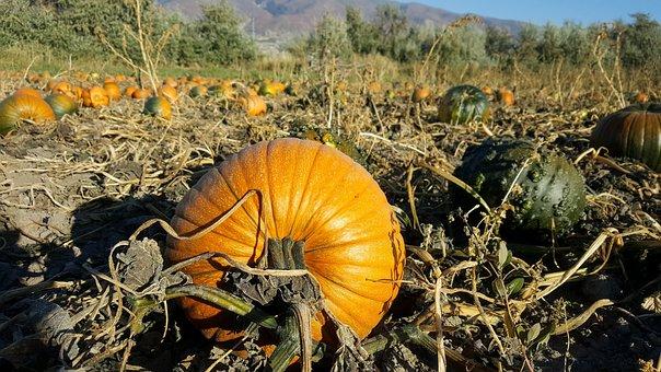 Halloween, Fall, Pumpkin, Autumn, Orange, October