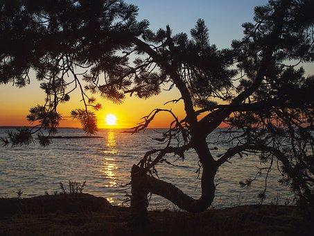 Landscape, Sunset, Lake, Evening, Tree, Silhouette