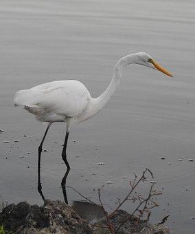Florida, Birds, Nature, Wildlife, Lake