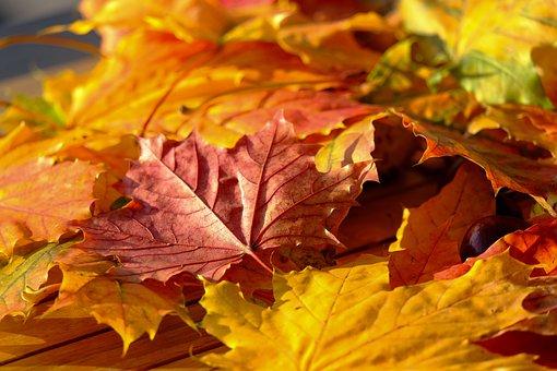 Leaf, Autumn Leaf, Nature, Autumn Colours, Orange