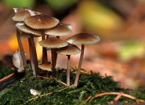 Mushrooms, Fungi, Autumn, Forest, Nature, Fungus, Food