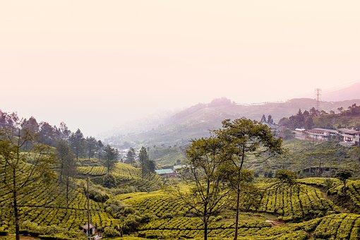 Bogor, Nature, Indonesia, Landscape, Tree, Forest