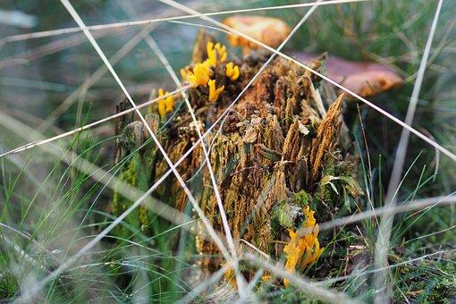 Mushroom, Forest, Nature, Autumn, Close Up, Moss, Macro