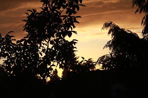 Sun, Red, Orange, Trees, Sky, Photo, Image, Recording